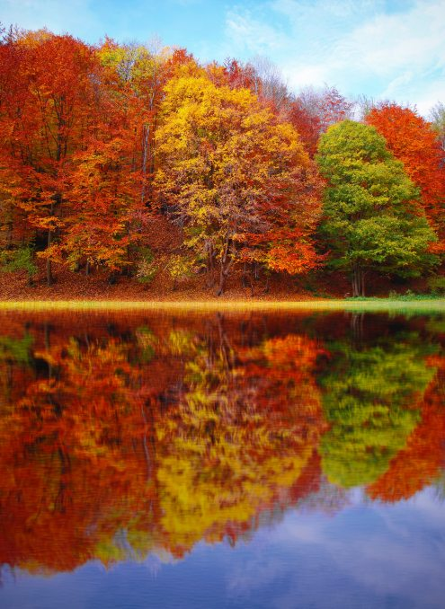 art-artwork-autumn-589808